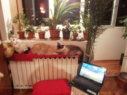 poze pisici Petruta