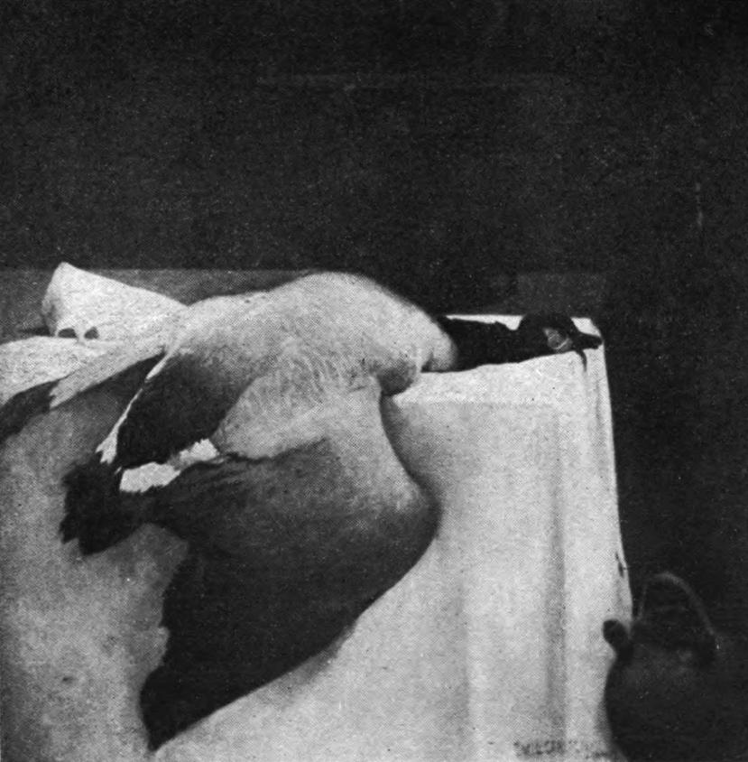 Emil Carlsen : Still life with goose, 1889.