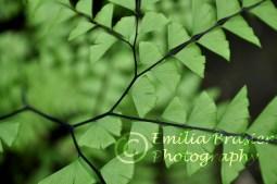 curved fern