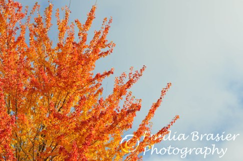Awesome color in fall.