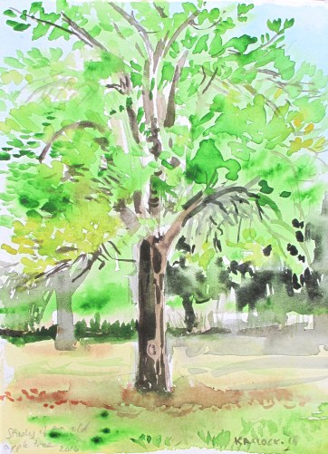 Study of Old Apple Tree, watercolor on paper, 8 by 6 in. Emilia Kallock 2016