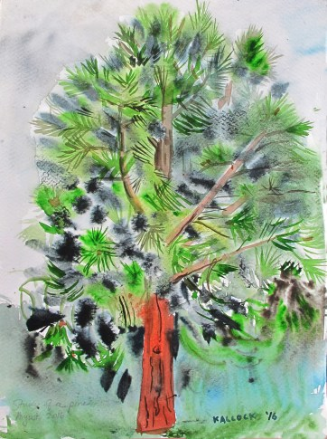 Study of Pine Tree (Tree of Dreams), watercolor on paper 10 by 8 in. Emilia Kallock 2016