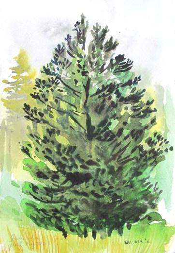 Study of Dark Pine, watercolor on paper, 8 by 6 in. Emilia Kallock 2016