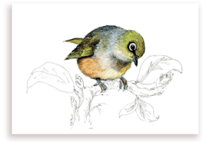 emilie geant, new zealand, , bird, painting, watercolor, New Zealand, native, art, print, poster, feather, sylvereye, waxeye, tauhou