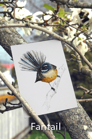 Fantail, piwakawa, print, bird, new zealand, New Zealand native bird, blue, Emilie Geant, illustration, watercolor, painting, ink, nature, feather,