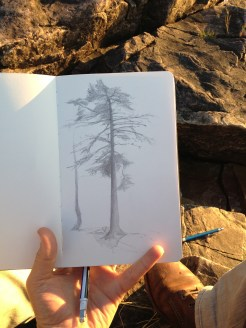 A tree I had admired for a while every time I went swimming and looked back at the shore from the water.
