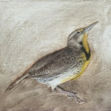 this meadowlark died when he flew into my window. It was sad but he'll live on in these paintings.