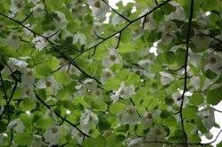 Blüten-022