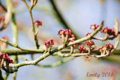 Frühling-2014-012