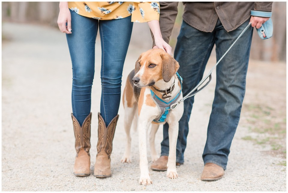 foxhound-dog-engagement-photos