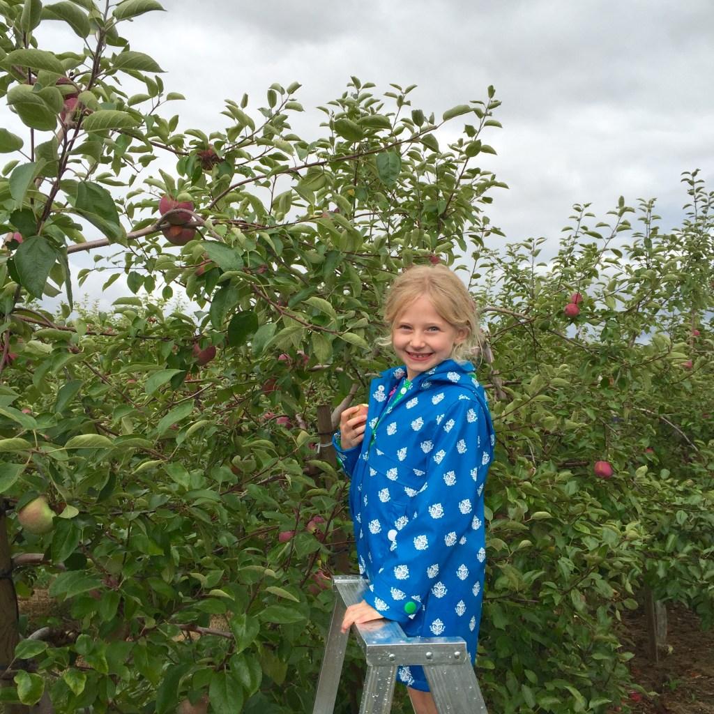 Apple-picking-helper