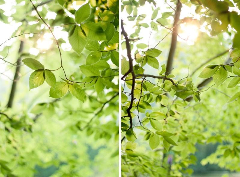 Sunlight Diptych #1