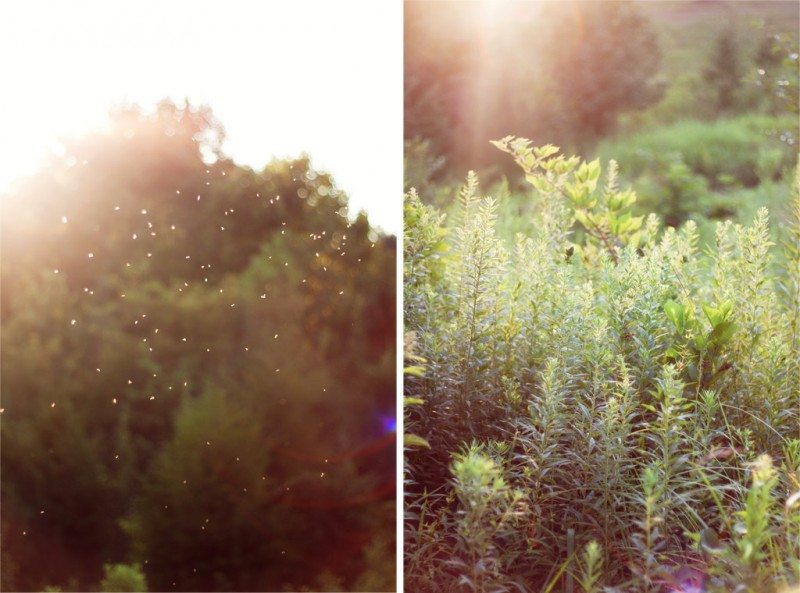 Sunlight Diptych #2