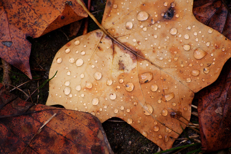 Rain drops on leaf