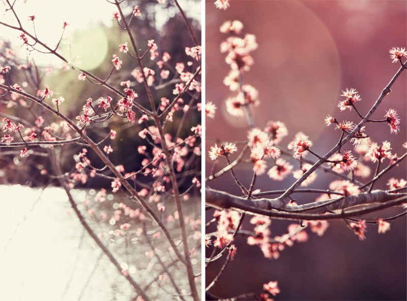 Spring buds flare diptych