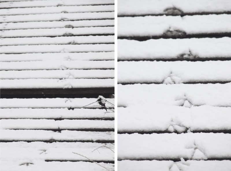 Duck footprints in snow