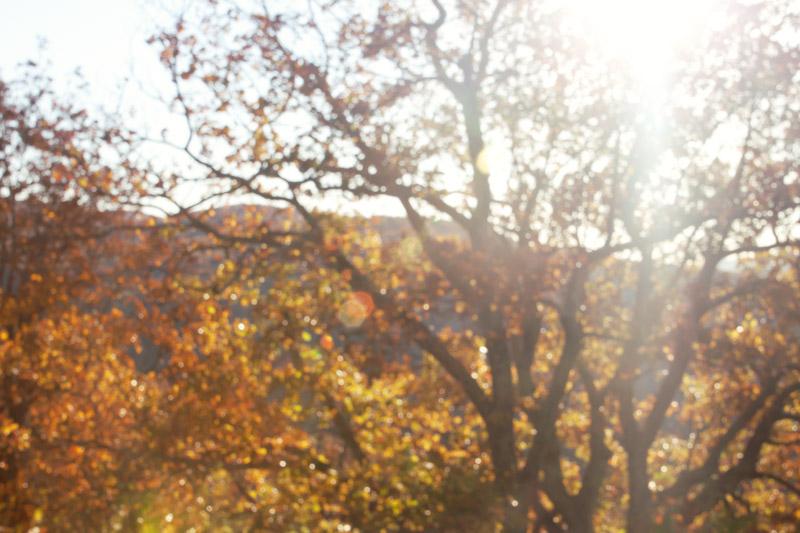 Fall Bokeh