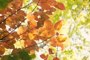 1007_leaves1