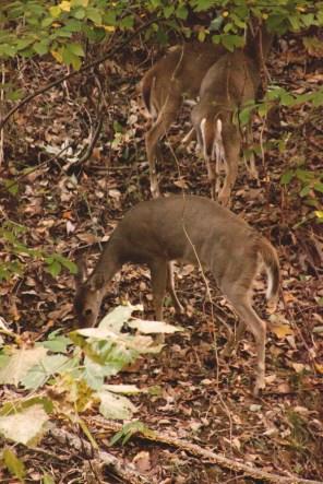1007_deer10