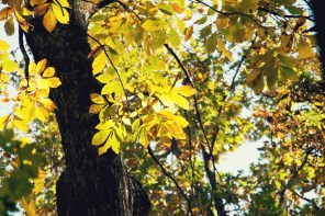 1021_fall-leaves1