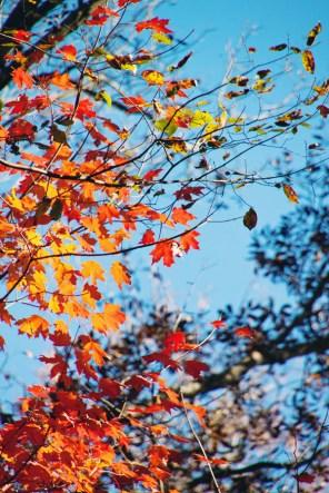 1021_fall-leaves2