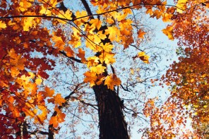 1021_fall-leaves3