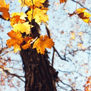 1021_fall-leaves4