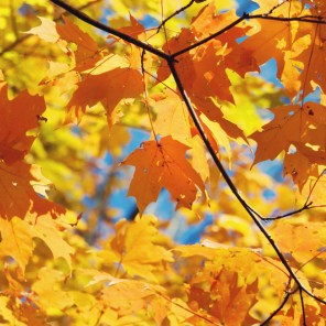 1021_fall-leaves5