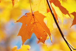 1021_fall-leaves6
