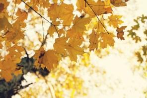 1021_fall-leaves7