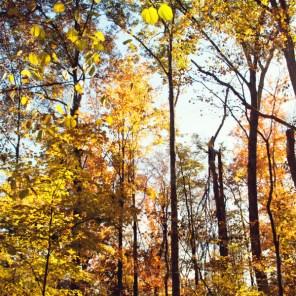 1021_fall-trees2