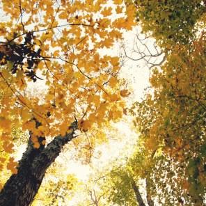 1021_fall-trees8