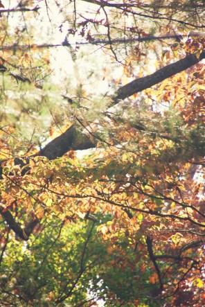 1023_leaves