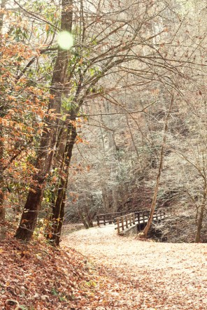 Bridge on Deep Creek Trail