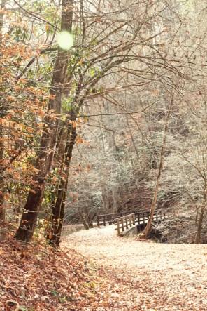 Bridge on Deep Creek Trail
