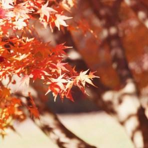 1115_leaves2