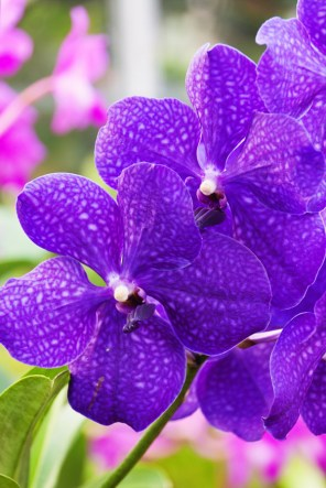 1115_orchid3