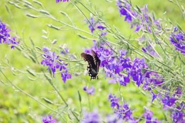 603_butterfly1