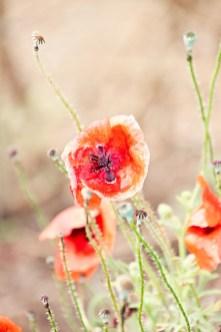 603_flowers1