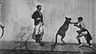 Boxing Kangaroo, documentary short, 1896.