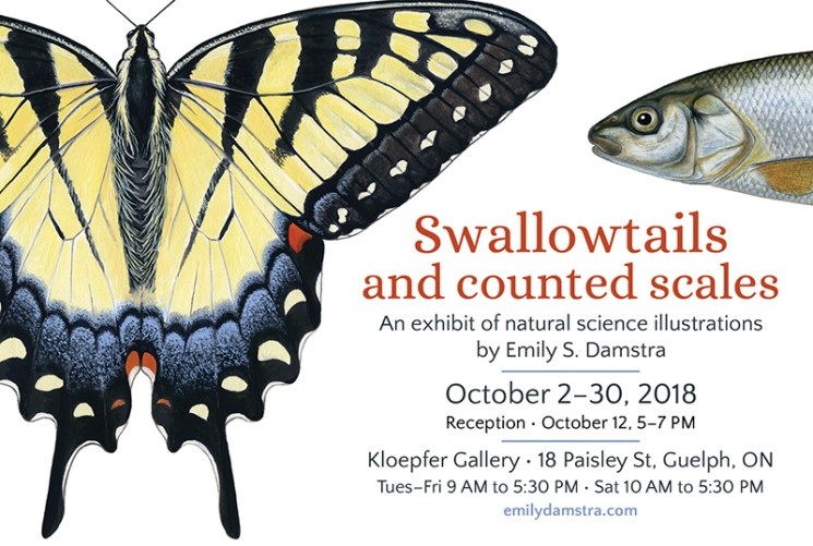 Swallowtails and counted scales exhibit postcard