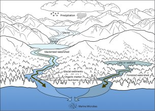 Diagram showing water and nutrient flow from icefield to ocean