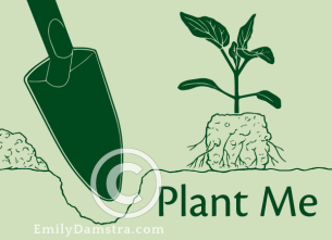 Plant Me illustration