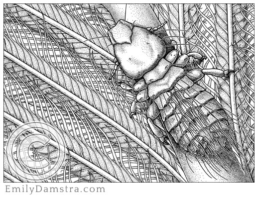 Illustration of Gary Larson's louse Strigiphilus garylarsoni