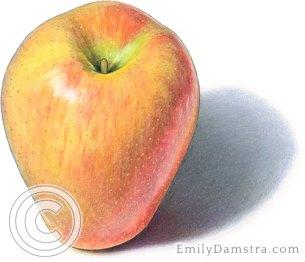 Sonya apple illustration