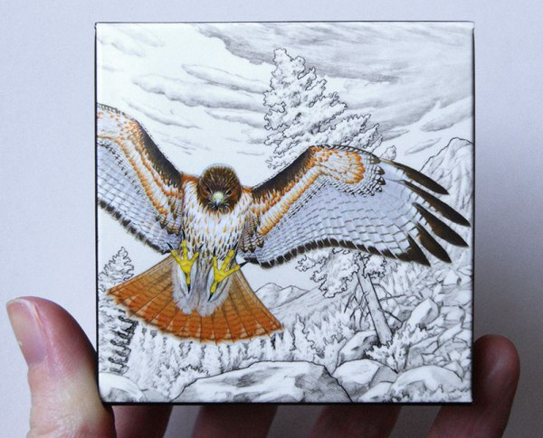 box for red-tailed hawk coin