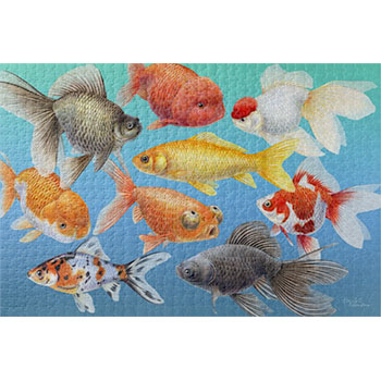 goldfish-puzzle