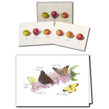 notecards-shopimages