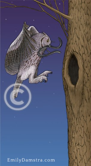 Screech owl carrying blind snake – Emily S. Damstra
