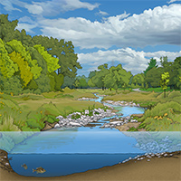 stream restoration illustration